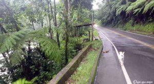 Putumayo carretera