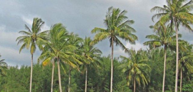 Khao Lak lake view bungalows