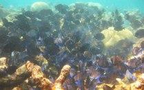 Schnorchel Tour am Belize Barrier Reef 3