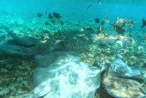 Schnorchel Tour am Belize Barrier Reef 7