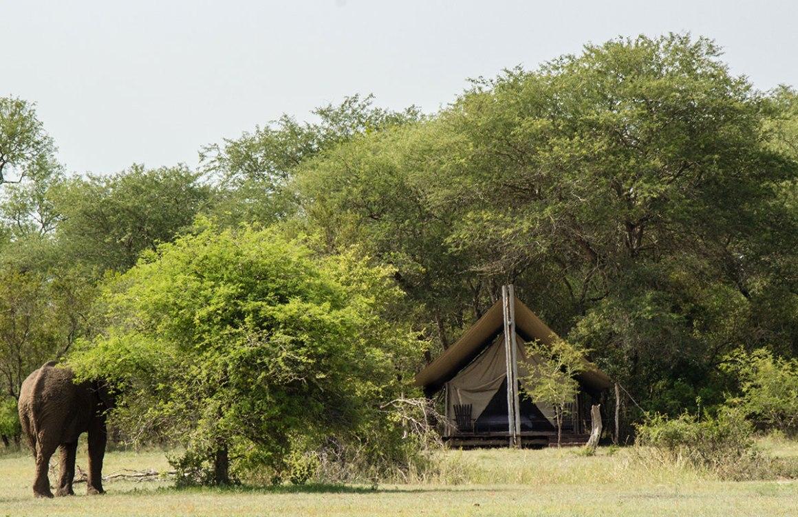 Zuid-Afrika Reistips Wandel safari te voet in het Kruger National Park