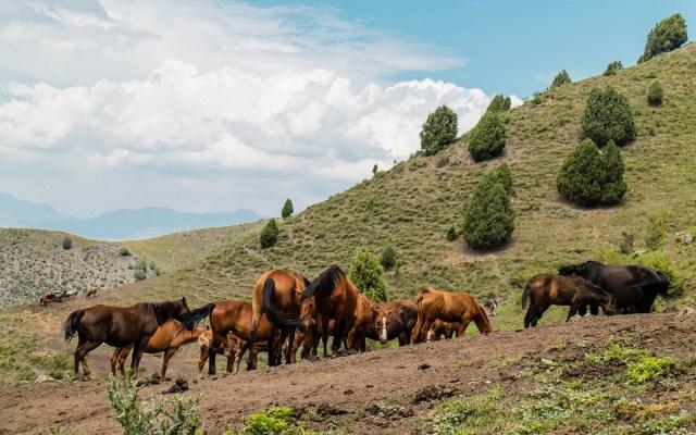 alai-mountains-pferde