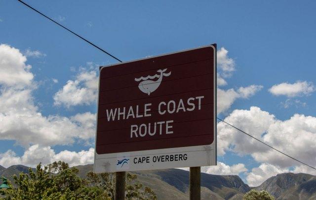 hermanus-whale-coast-road