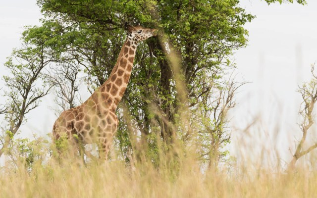 game-drive-murchison-falls-nationalpark-41