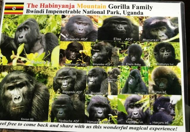 gorilla-trekking-uganda-bwindi-habinyanja-group