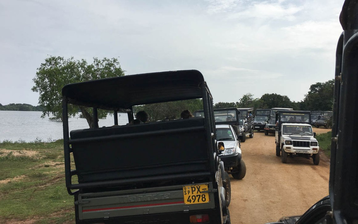 Dierenwelzijn in Yala Nationaal Park Sri Lanka