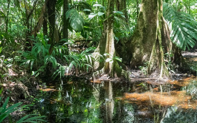 Tortuguero Nationalpark Mawamba Lodge Walking Trail Regenwald