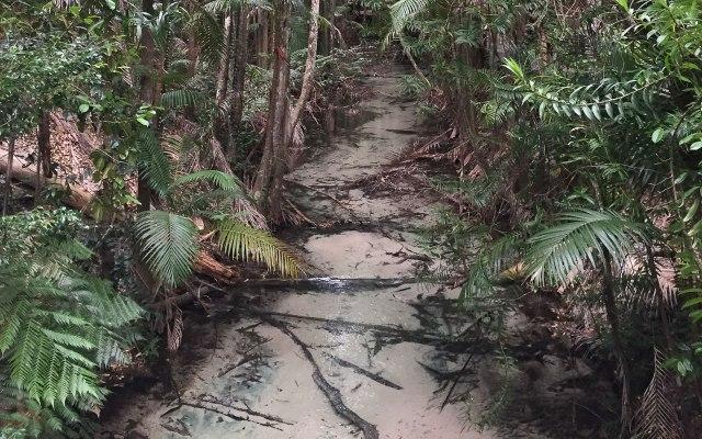 australien-ostkueste-fraser-island-mangroven