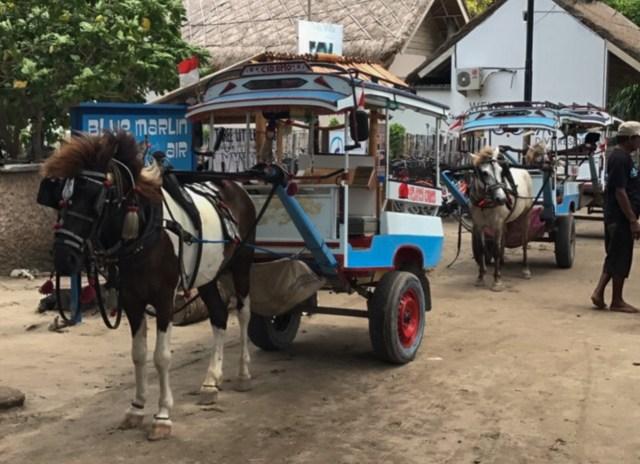 gili-islands-transportmittel-kutschen