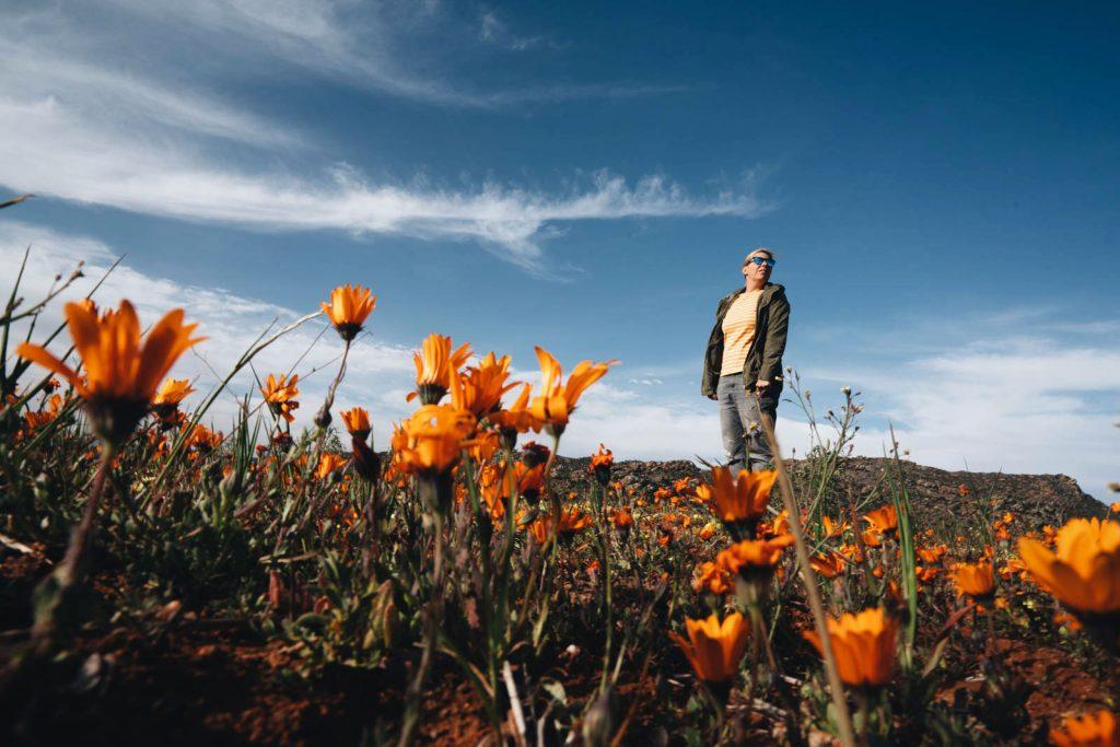 Wildflowerbloei in Noordelijke Kaap Zuid-Afrika