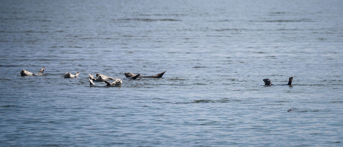 Zeehonden Sylt bezienswaardigheden