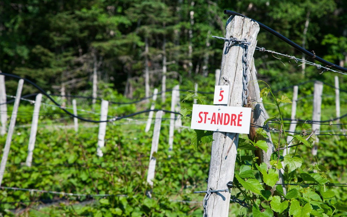 "quebec-roadtrip-grapevines ""width ="" 1200 ""height ="" 750 ""srcset ="" https://i0.wp.com/viel-unterwegs.de/wp-content/uploads/2019/08/quebec-roadtrip-weinreben.jpg?w=1160&ssl=1 1200w, https: //viel-unterwegs.de/wp-content/uploads/2019/08/quebec-roadtrip-weinreben-500x313.jpg 500w, https://viel-unterwegs.de/wp-content/uploads/2019/08/quebec -roadtrip-weinreben-768x480.jpg 768w, https://viel-unterwegs.de/wp-content/uploads/2019/08/quebec-roadtrip-weinreben-1024x640.jpg 1024w ""sizes ="" (max-breedte: 1200px ) 100 vw, 1200 px ""/></noscript data-recalc-dims="