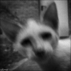 Gatos orgullosos (II)