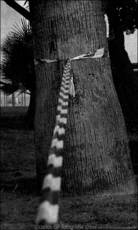 El parque - árbol atado