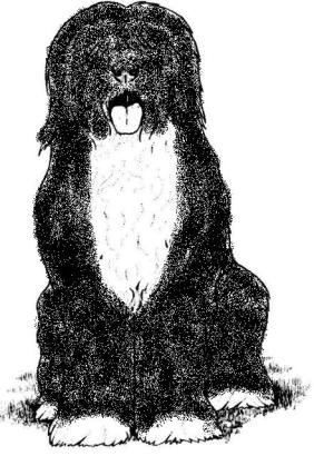 Povestea unui câine ciobănesc corb - Jurnalul unui Sultan 4