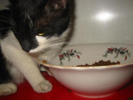 pisica-alb-negru
