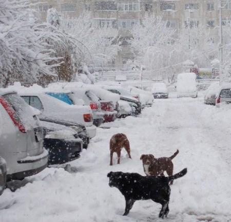 iarna in imagini frumoase 31