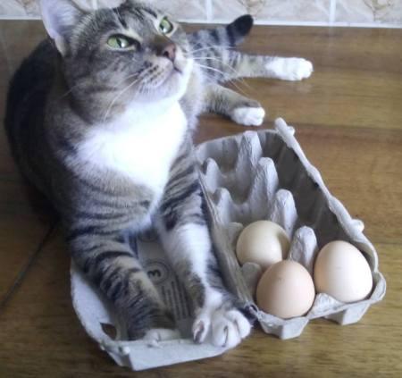 cea-mai-dragalasa-pisicuta