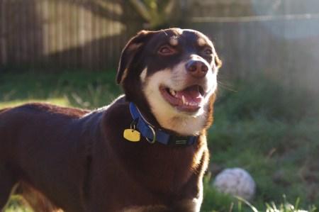 Câinele care a câștigat la loto premiul cel mare