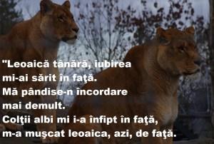 Nichita Stănescu - poezii scurte sau doar citate