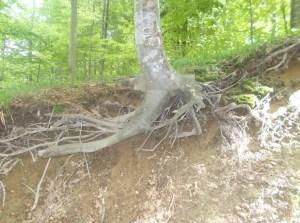 Rădăcini rupte. Moartea umanității