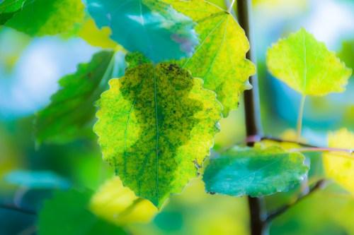dsc_1698-1920-green-leaf-vienhoang-com