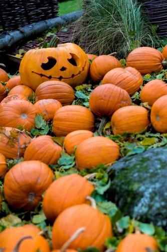 dsc_2083-1920-pumpkin-vienhoang-com
