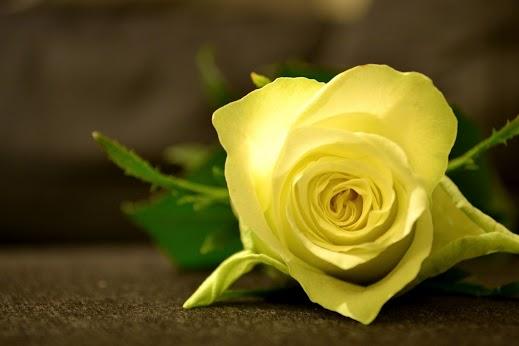 rose_cont