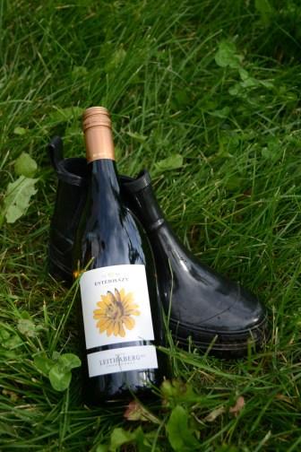 Weingut Esterhazy1
