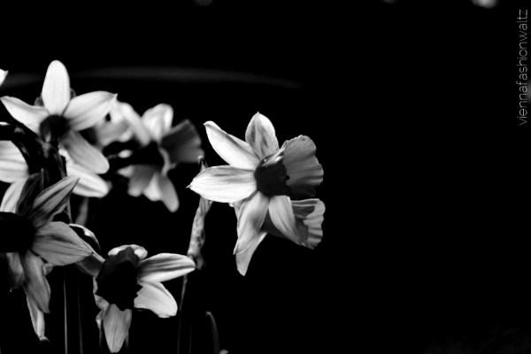 Black and White Challenge Facebook Blog Vienna Fashion Waltz_5