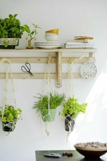 http://freshideen.com/einrichtungsideen/zimmerpflanzen-arten.html