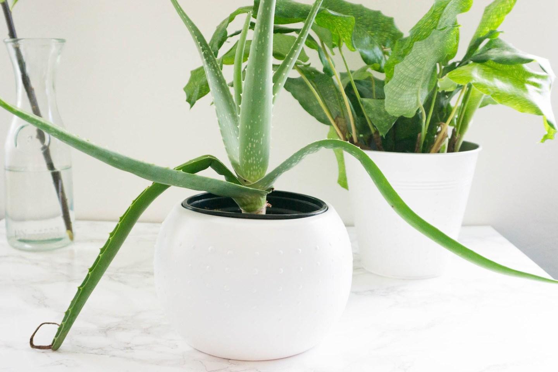 Upcycling || DIY Blumentöpfe für den Indoorgarden
