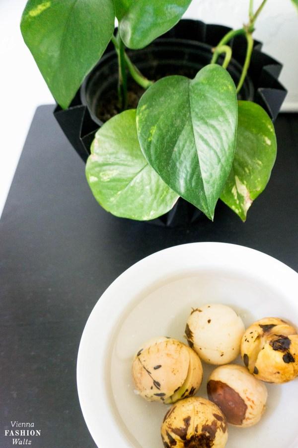 Avocado Pflänzchen ziehen - Mit dieser Methode gelingt es sicher!