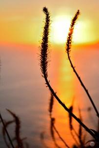 Sunset over the sea, Madeira © JP400