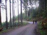 Roethelstein woods