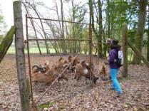 Geras Animal Park