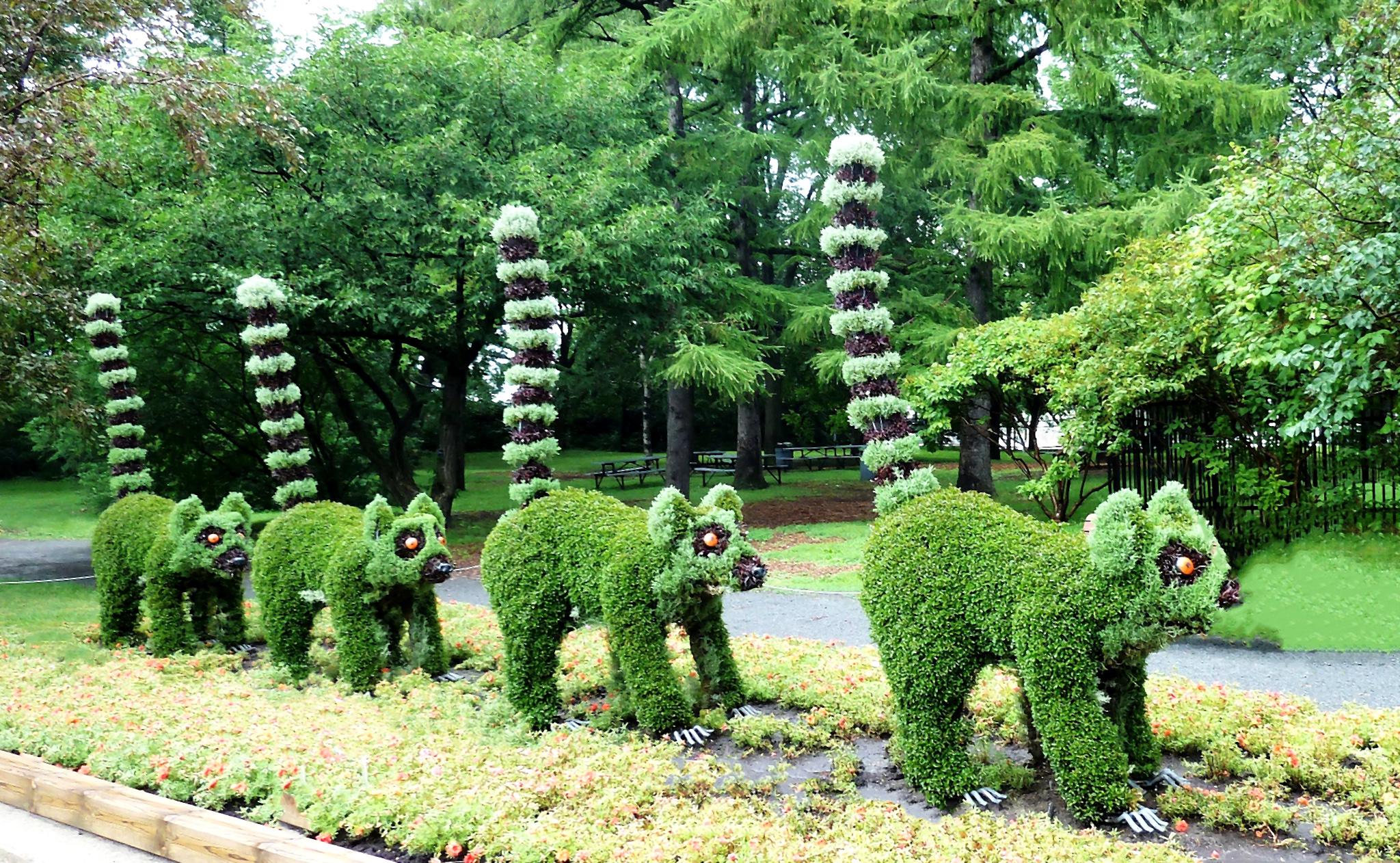 Lémuriens végétaux