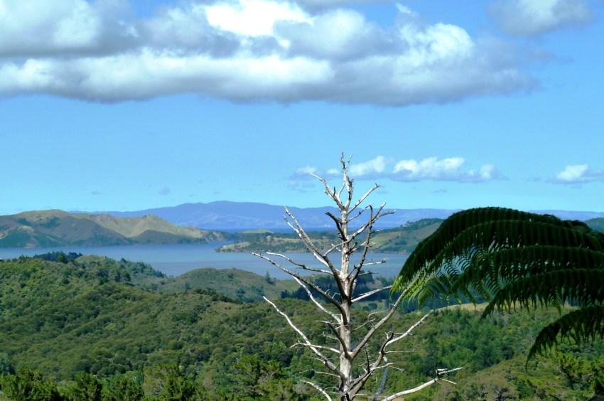Paysage Nouvelle-Zélande