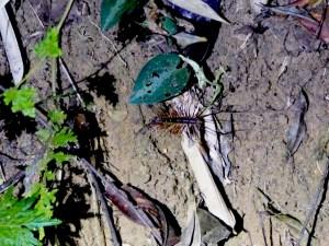 Khao Sok insecte