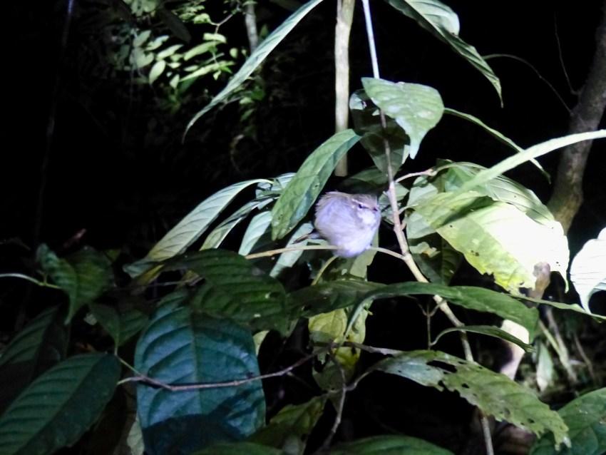 Khao Sok oiseau
