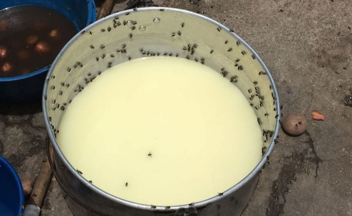 Grave invasión de moscas en barrios aledaños al Relleno Doña Juana