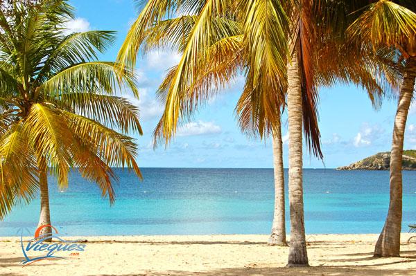 Vieques  Sun Bay Beach  Photos Map Beach Guide