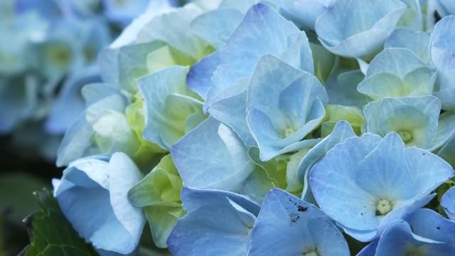 Vier Jahreszeiten Blumen blumen vier jahreszeiten