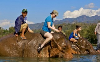 Laos Elephant Riding Package Tours at Elephant Lodge for 3 days - Laos elephant riding tours