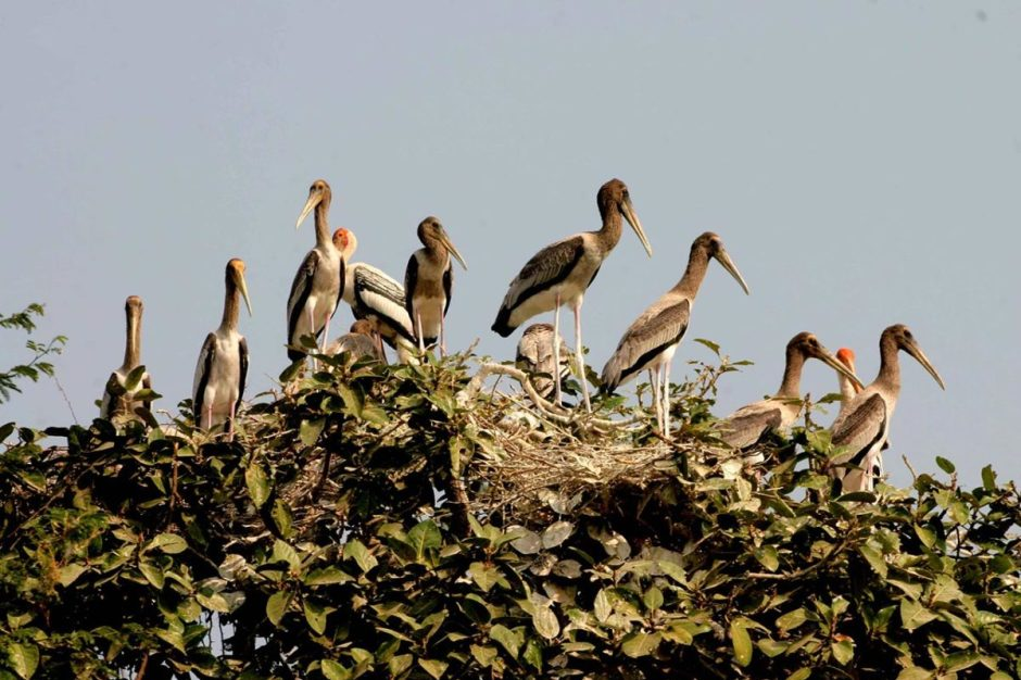 CAMBODIA  BIRD-WATCHING TOUR