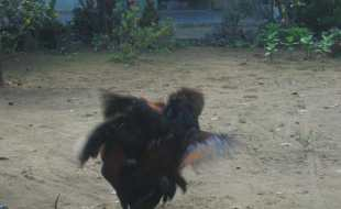 Motorbike tours in Southern Vietnam Pic03