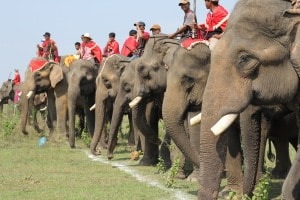 Racing Elephants in Tay Nguyen 300x200 - VIETNAM CENTRAL HIGHLANDS