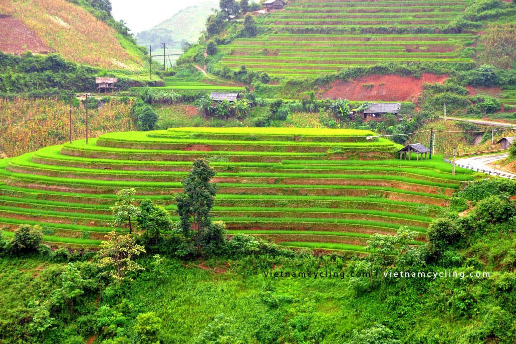 terraced paddy fields, bac ha, vietnam