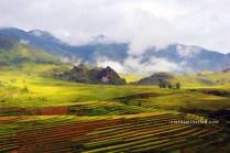 sapa paddy field