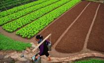 Vegetables fields